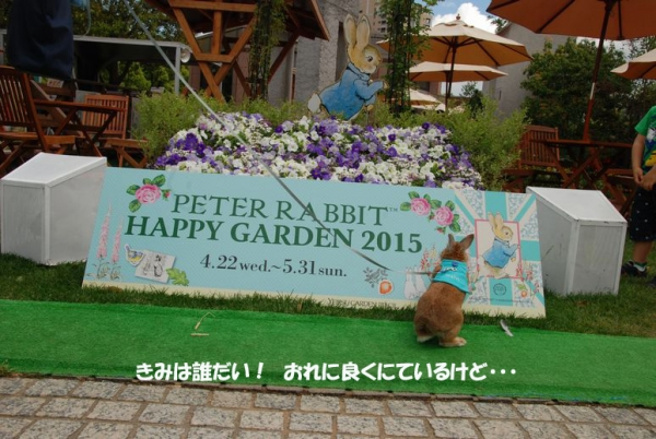 PETER RABBIT 2015 002