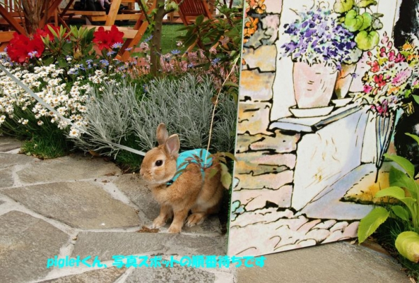 PETER RABBIT 2015 003