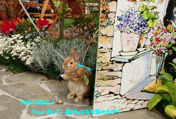PETER RABBIT 2015 004