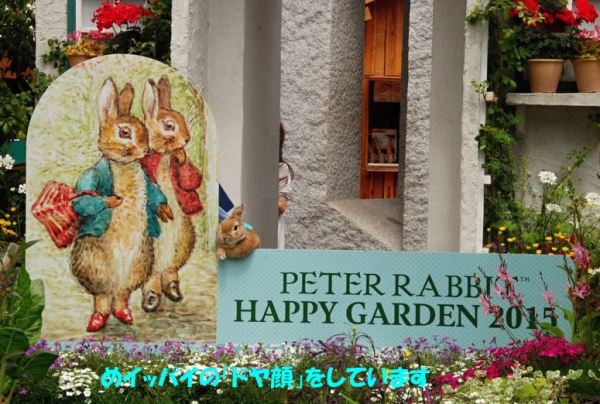 PETER RABBIT 2015 005