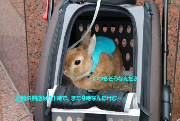 PETER RABBIT 2015 008