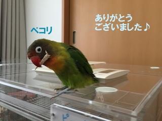 IMG_5040.jpg