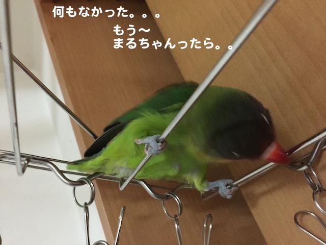 IMG_7221.jpg