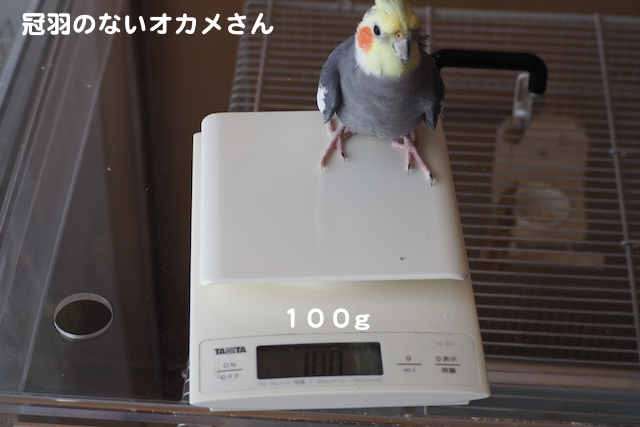 P4280004.jpg