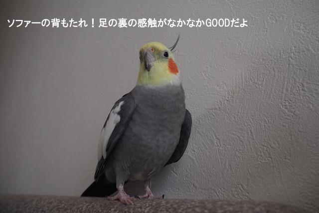 P5150012.jpg