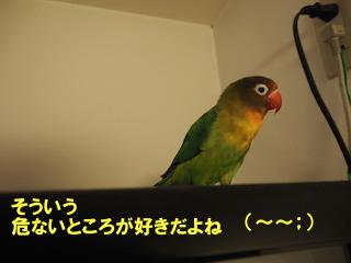 PC240031.jpg