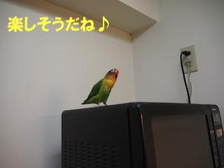 PC240034.jpg