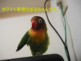 PC240036.jpg