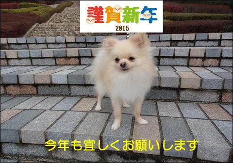 201511.jpg