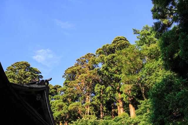 山陰 鳥取 大山 夏山開き たいまつ行列 大山寺