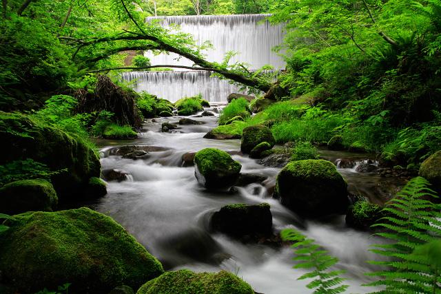 山陰 鳥取 奥大山 江府町 木谷沢渓谷 渓流