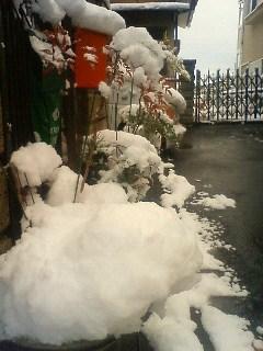 お正月の雪