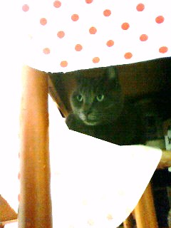 隠れてます 魔女猫