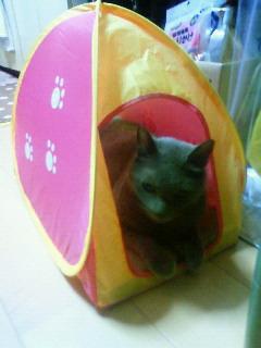 魔女猫の家のっとり