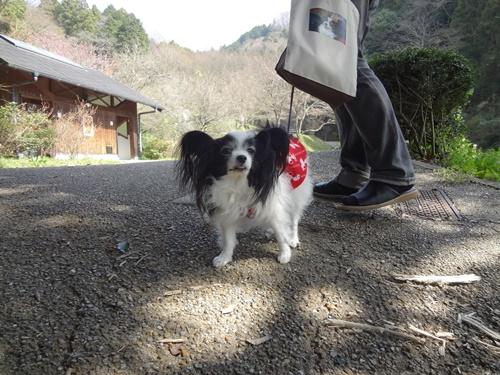 弘川寺からの散歩道