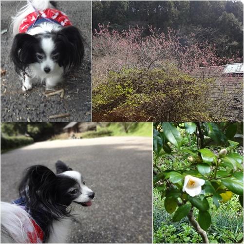 弘川寺からの散歩道2