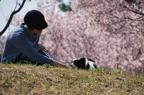 土手の上、桜をバックに