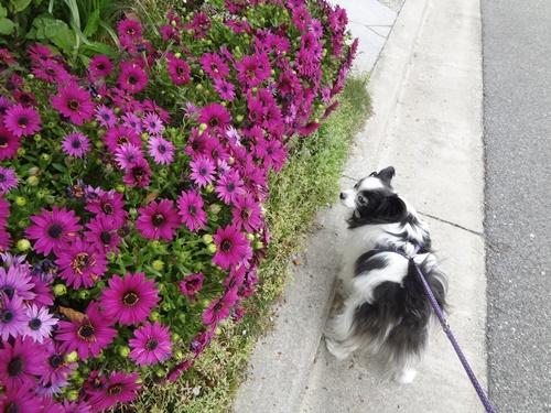 お花がきれい