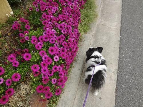 濃いピンクのお花とルビー