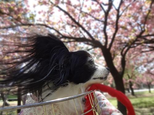 耳毛が風になびいて