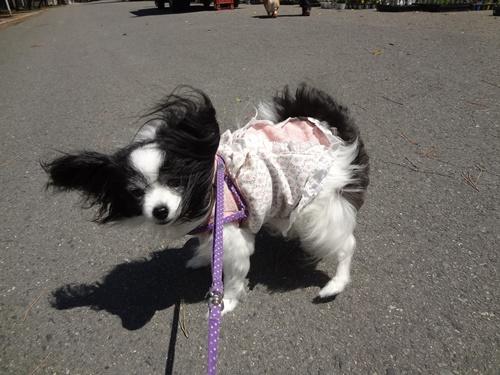 風が強い!