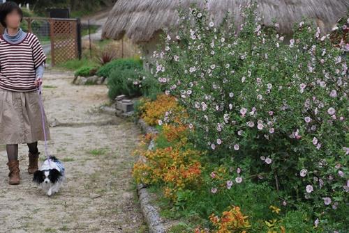お花畑をお散歩2