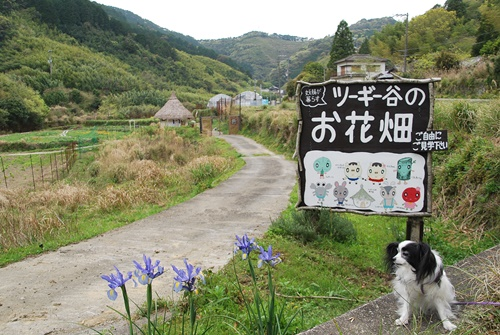 ツーギー谷のお花畑看板と