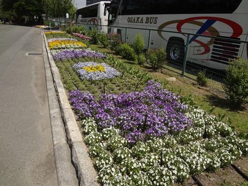 駐車場横の花壇