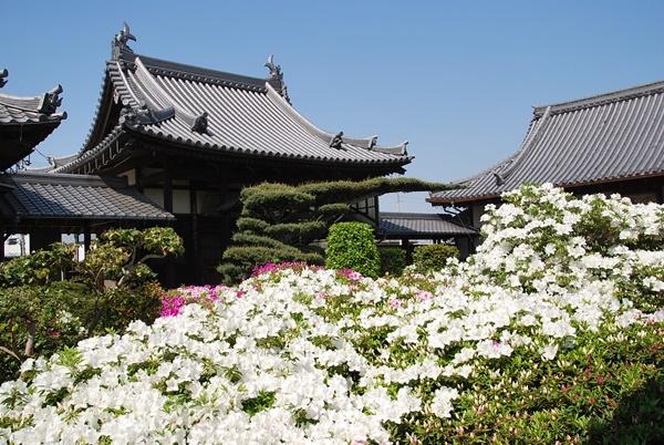 つつじの庭園2