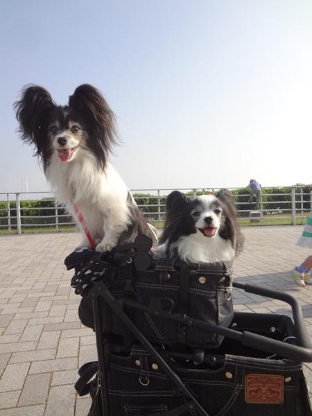 マリィちゃん&ルビー