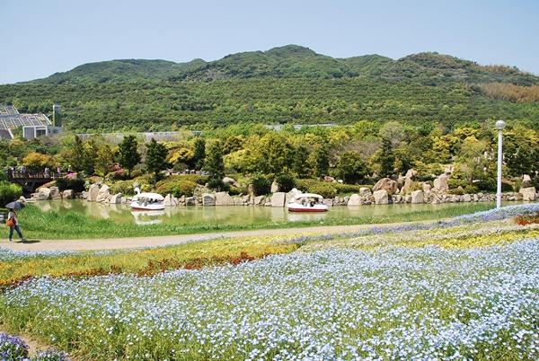 ネモフィラのお花畑と池