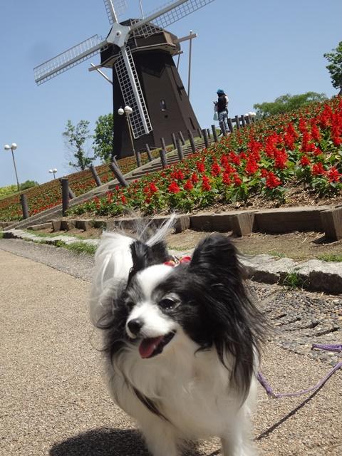 ルビーと風車