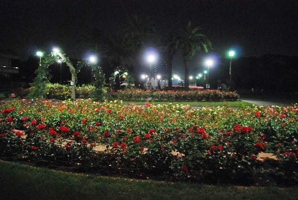 ライトアップ(薔薇花壇)