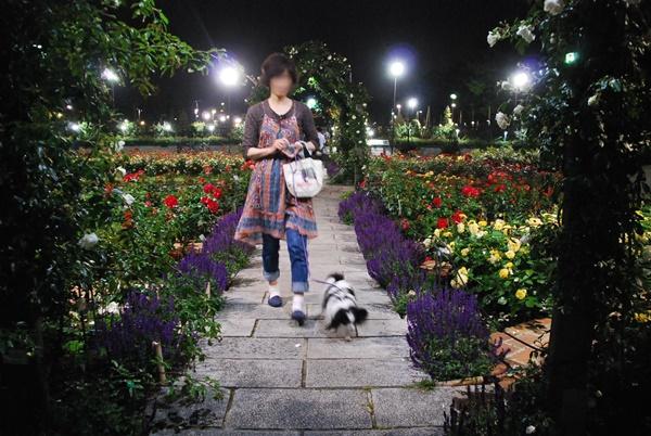 ライトアップ(薔薇花壇をお散歩1)