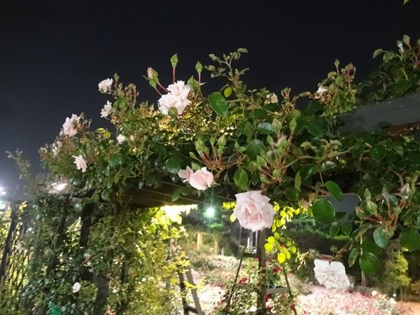 薔薇のゲート