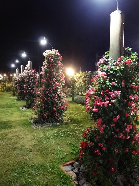 薔薇のツリー(ピンク)
