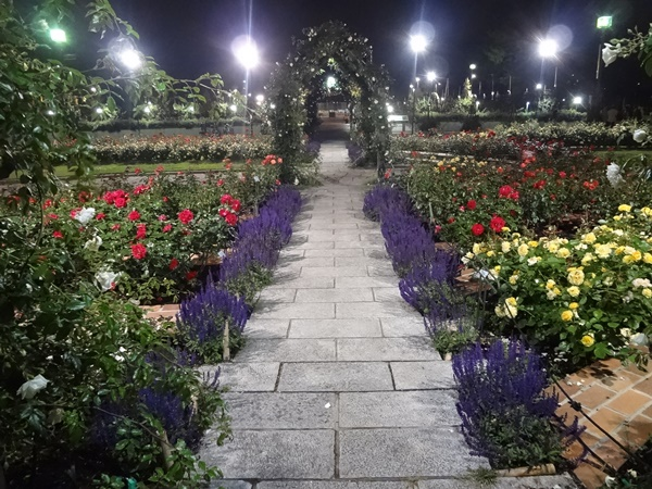 噴水前薔薇の花壇
