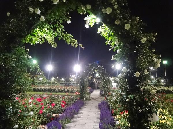 噴水前薔薇の花壇2