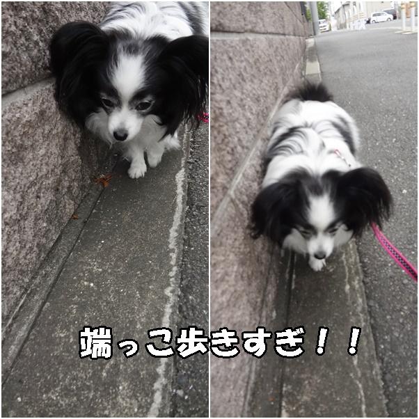 隅っこ歩きすぎ!!