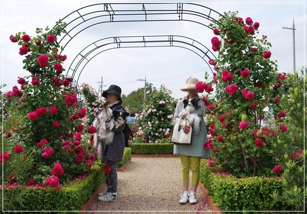 りこままさんと赤い薔薇のアーチで2