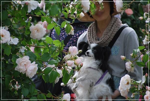 白いバラのアーチで2