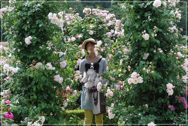 白いバラのアーチンところで