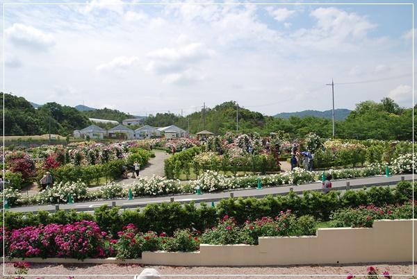 薔薇園全景2