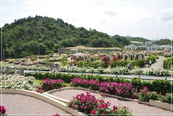 薔薇園全景