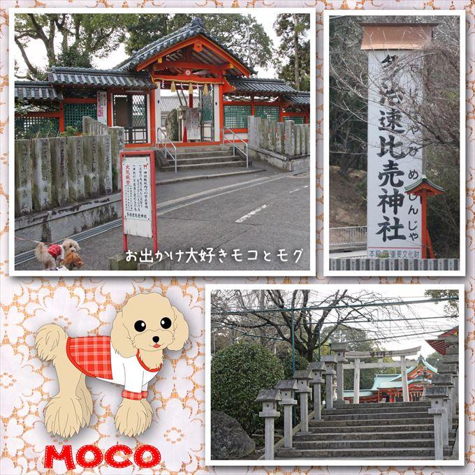 100_20150323203626e6c.jpg