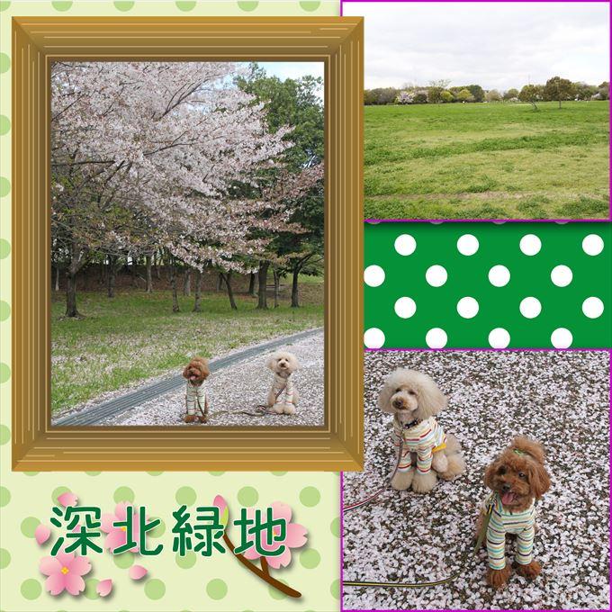 21_20150505105205b3f.jpg