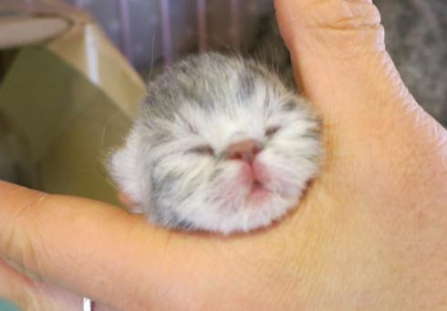 7)子豚さんみたいなお鼻