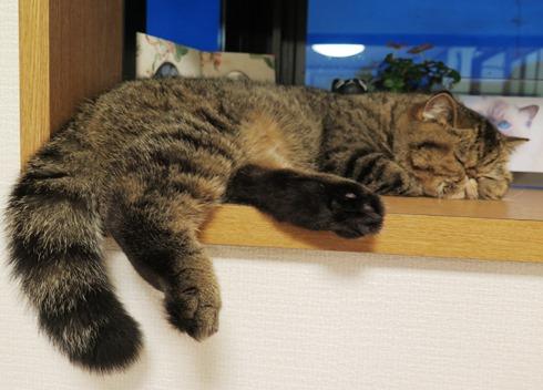 6)愛するはちゅの寝顔