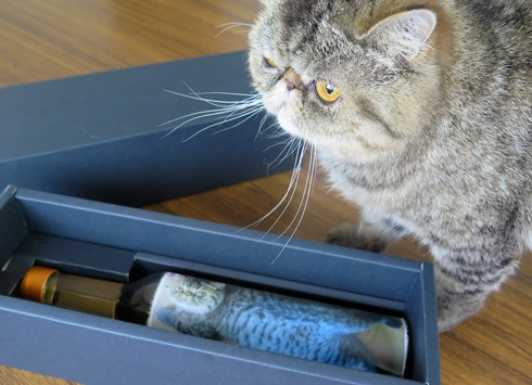 23)見たことあるネコさんでつ