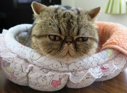 7)寝相が悪すぎるでぷ。